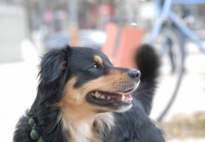 cane-parco-giochi