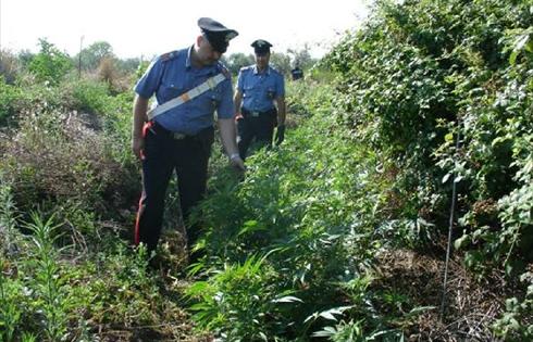 piantagione20marjuana