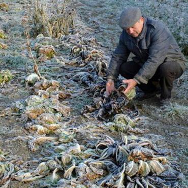 agricoltura-neve