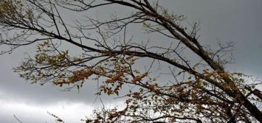 Maltempo: vento forte piega gli alberi alla periferia di Ancona