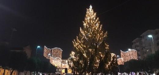 albero-piazza-xx-settembre